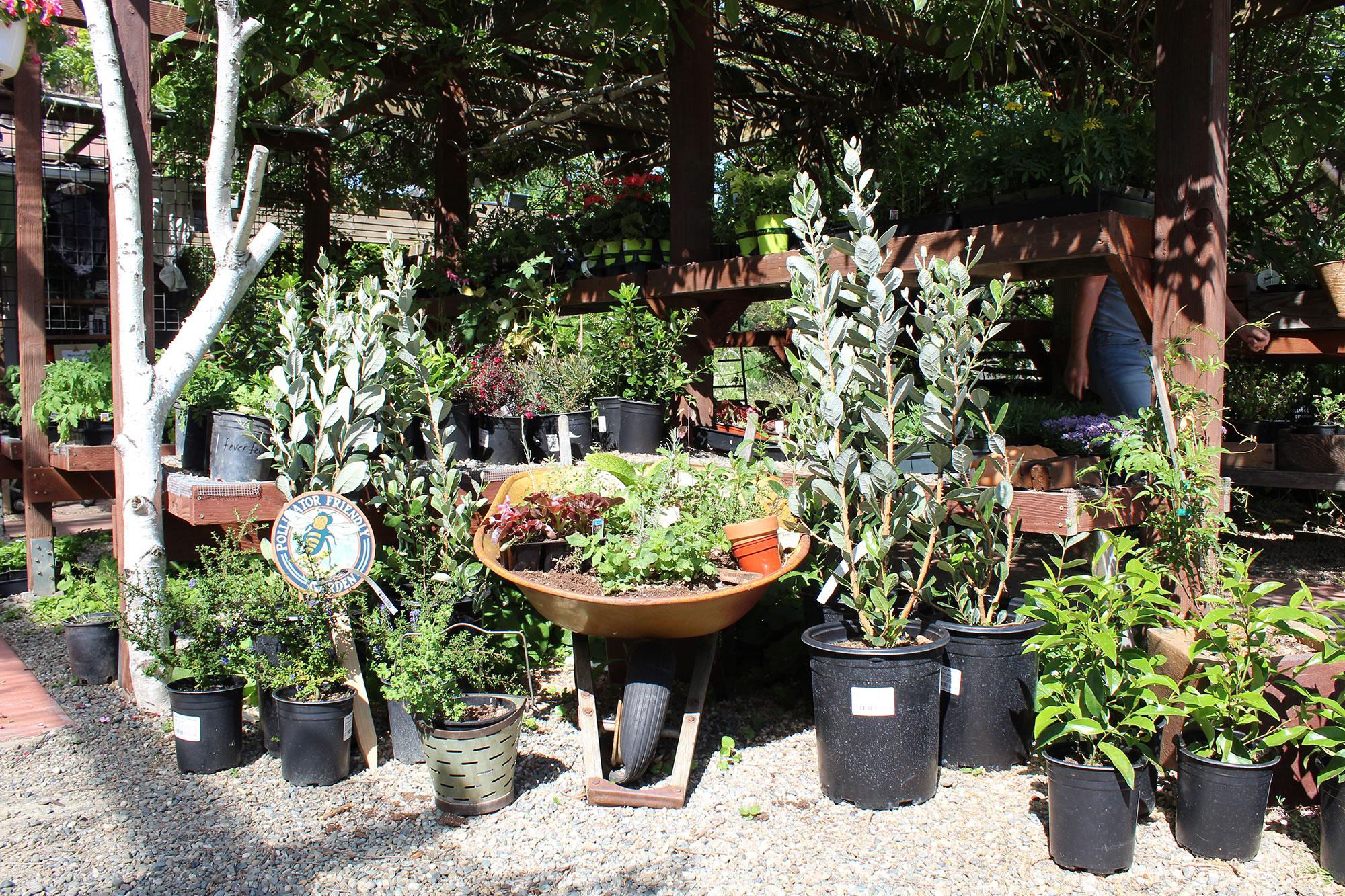 nursery-plant-starters