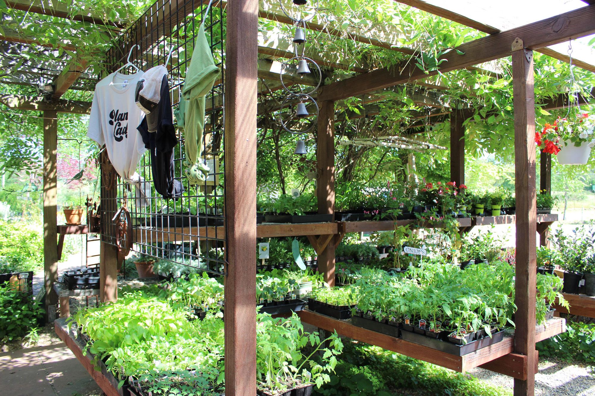nursery-plants